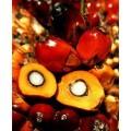 Масло Пальмовое (рафинированное) 100гр