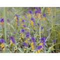 Косметическая отдушка Луговые травы 10мл