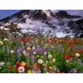 Косметическая отдушка Альпийские цветы 10мл