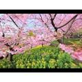 Косметическая отдушка Райский сад 10мл